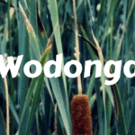 Wodonga wiradjuri bulrush aboriginal