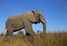 Australia elephant in the room invasion treaty sovereignty indigenous