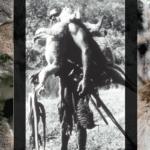 aboriginal hunting kangaroo koala