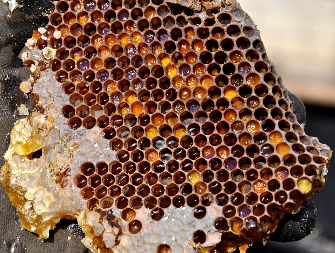 jelly bush honey australia 2