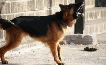 Police attack dog aboriginal girl children western australia