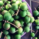 macadamia nuts australian aboriginal bush food superfood 1