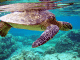 sea turtle traditional hunting rights derryn hinch
