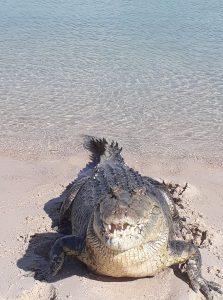 nike baru crocodile bawaka arnhem land aboriginal