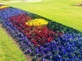 MELTON CITY COUNCIL ABORIGINAL FLAG FLOWERS GARDEN