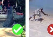 racist media indigenous yolngu aboriginal crocodile tourism