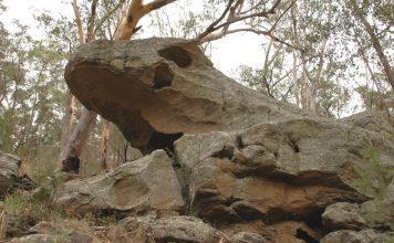 tiddalik the frog aboriginal dreamtime stories indigenous australia