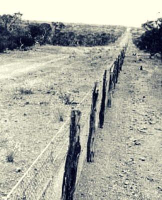 nita spedding the forgotten aboriginal indigenous generation