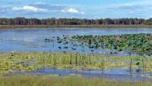 Mamukala wetlands kakadu