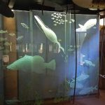 bowali visitor centre jabiru kakadu national park