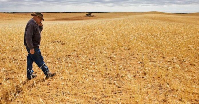 drought farmers australia aboriginal knowledge
